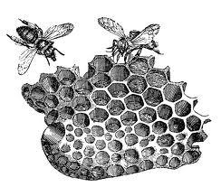 20120727-bees.jpeg