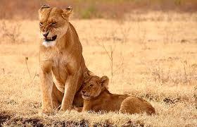 20120907-lion2.jpeg