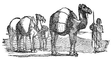 20121012-camel.png