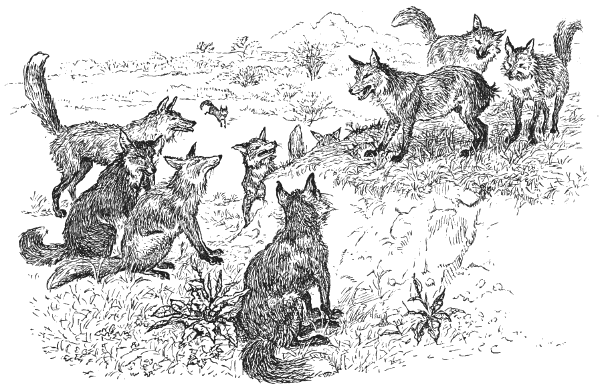 20130308-foxes.png