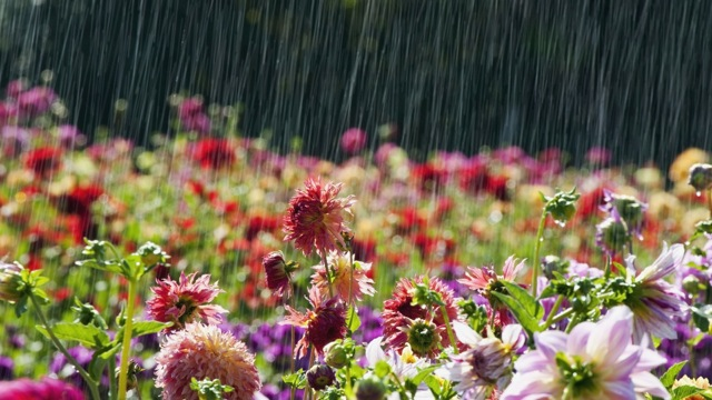 20131018-Beautiful-Flowers-in-rain-Latest-Wallpaper.jpeg