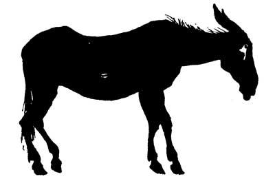 20140314-mule2.jpg
