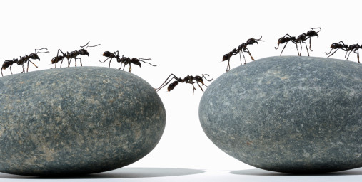 20150317-c-ants.png