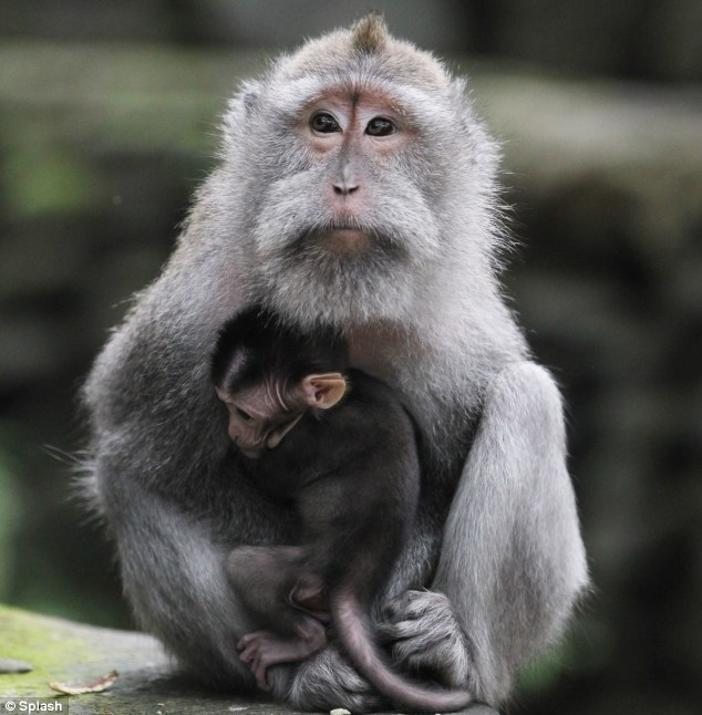 20150821-monkey1.jpg