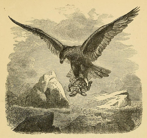 20151023-turtle_eagle.jpg