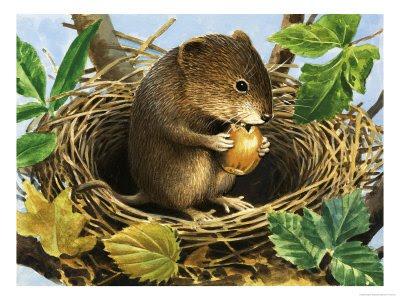 20160205-acorn_mouse_oak.jpg