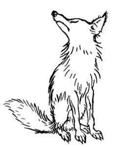 20160916-ape_disdain_fox.jpg
