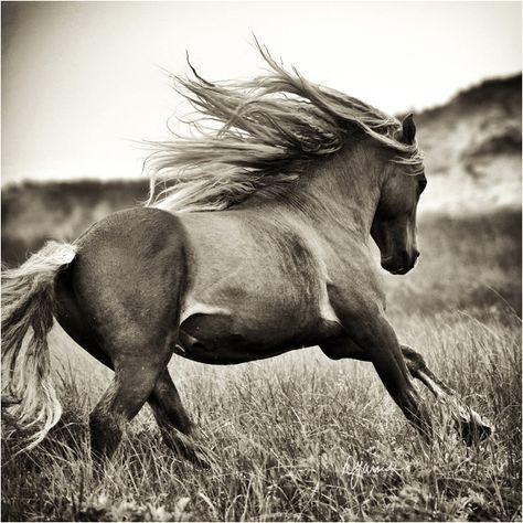 20170228-wild_horse.jpg